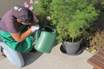 Floristik und Gartengestaltung